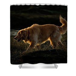 Shower Curtain featuring the photograph Golden by Randy Hall