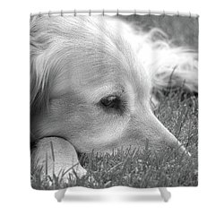 Golden Retriever Dog In The Cool Grass Monochrome Shower Curtain by Jennie Marie Schell