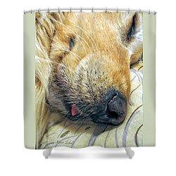Golden Retriever Dog Little Tongue Shower Curtain