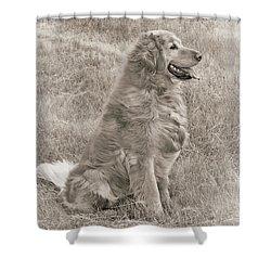 Golden Retriever Dog Sepia Shower Curtain by Jennie Marie Schell