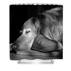 Golden Retriever Dog With Master's Slipper Black And White Shower Curtain by Jennie Marie Schell