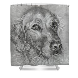 Golden Retriever Drawing Shower Curtain