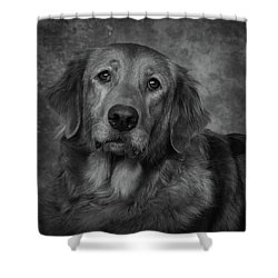 Golden Retriever In Black And White Shower Curtain by Greg Mimbs