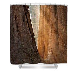 Golden Sequoia Shower Curtain