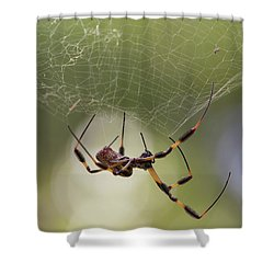 Golden-silk Spider Shower Curtain