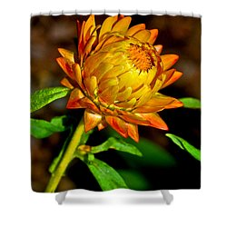 Shower Curtain featuring the photograph Golden Strawflower 002 by George Bostian