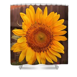 Golden Sunflower Closeup Shower Curtain