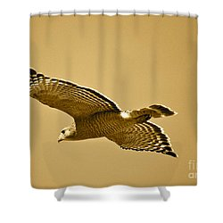 Golden Sunlight On Hawk Shower Curtain by Carol Groenen