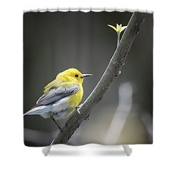 Golden Swamp Warbler Shower Curtain by Gary Hall