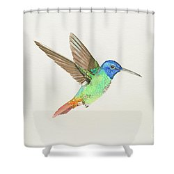 Golden-tailed Sapphire Shower Curtain