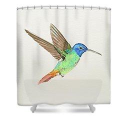 Golden-tailed Sapphire Shower Curtain