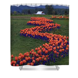 Shower Curtain featuring the photograph Golden Thread by Peter Simmons