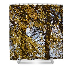 Golden Tree 2 Shower Curtain by Carol Lynch