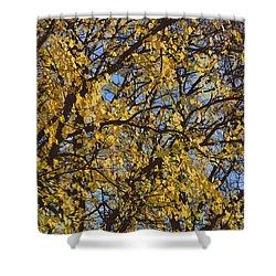 Golden Tree 3 Shower Curtain by Carol Lynch