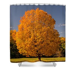 Shower Curtain featuring the photograph Golden Tree Of Autumn by Gary Slawsky