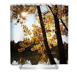 Golden Trees In Autumn Sindelfingen Germany Shower Curtain by Matthias Hauser