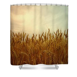 Golden Wheat Shower Curtain