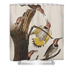 Golden-winged Woodpecker Shower Curtain by John James Audubon