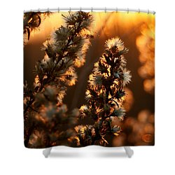 Goldenrod At Sunset Shower Curtain