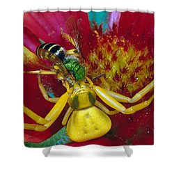 Goldenrod Crab Spider Misumena Vatia Shower Curtain by Panoramic Images