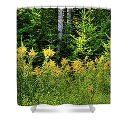 Shower Curtain featuring the photograph Goldenrod In The Adirondacks by David Patterson