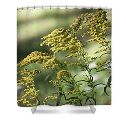 Goldenrod -  Shower Curtain