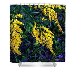 Shower Curtain featuring the photograph Goldenrod by Shawna Rowe