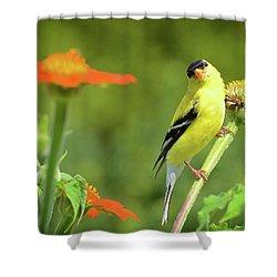 Goldfinch Feeding In A Garden Shower Curtain