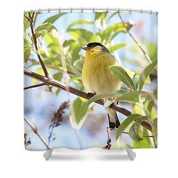 Goldfinch In Spring Tree Shower Curtain by Carol Groenen