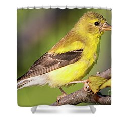 Shower Curtain featuring the photograph Goldfinch In The Early Morning  by Ricky L Jones
