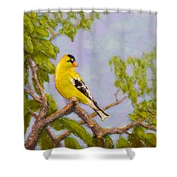Shower Curtain featuring the painting Goldfinch by Joe Bergholm