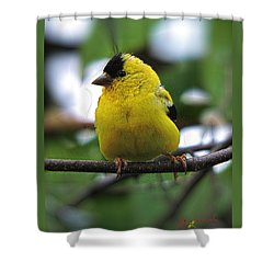 Goldfinch Shower Curtain by John Selmer Sr