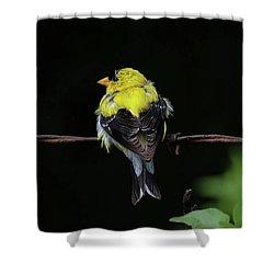 Goldfinch Shower Curtain by Ronda Ryan