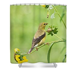 Goldfinch Snackbar Shower Curtain