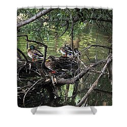 Gone Duck Hunting Shower Curtain by Natalie Ortiz