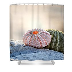 Gone Shelling Shower Curtain