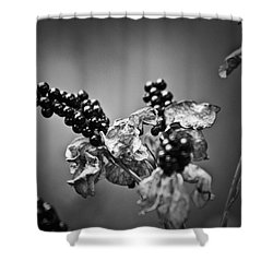Gone To Seed Blackberry Lily Shower Curtain by Teresa Mucha