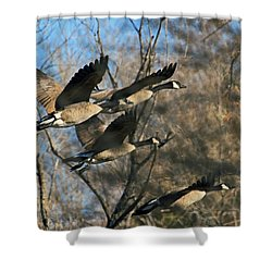 Shower Curtain featuring the photograph Gone With The Wings by Donna Kennedy