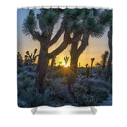 Good Morning From Joshua Tree Shower Curtain