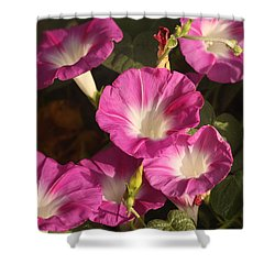 Shower Curtain featuring the photograph Good Morning, Glory by Sheila Brown