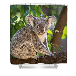 Good Morning Koala Shower Curtain