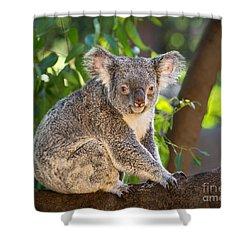 Good Morning Koala Shower Curtain by Jamie Pham