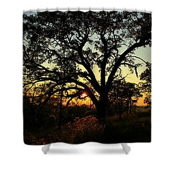 Shower Curtain featuring the photograph Good Night Tree by Viviana  Nadowski