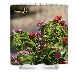 Goodbye Butterfly Shower Curtain by Anne Rodkin