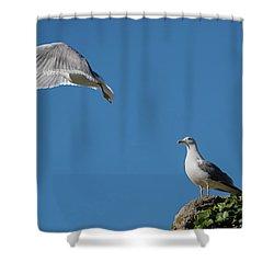 Goodbye My Love Shower Curtain