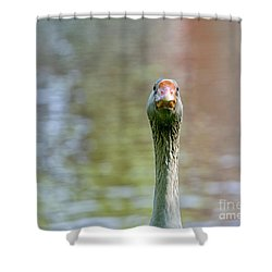 Goose Close-up Shower Curtain by Patricia Hofmeester