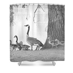 Goose Family  Shower Curtain by Clarice Lakota