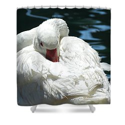 Goose Feather Siesta Shower Curtain