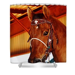 Gorgeous Horse And Bridle Shower Curtain