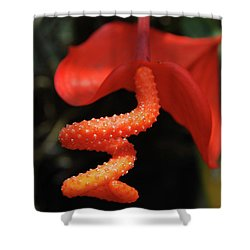 Gorgeous Orange Tropical Flower Blossom Shower Curtain